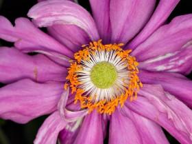 Universe in a flower by Peter Adams