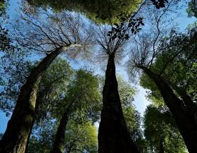Wunderlick Trees by Peter Adams.