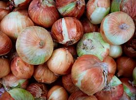 Onions by Peter Adams.