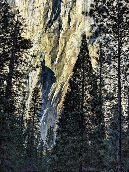 El Capitan Pines by Peter Adams.