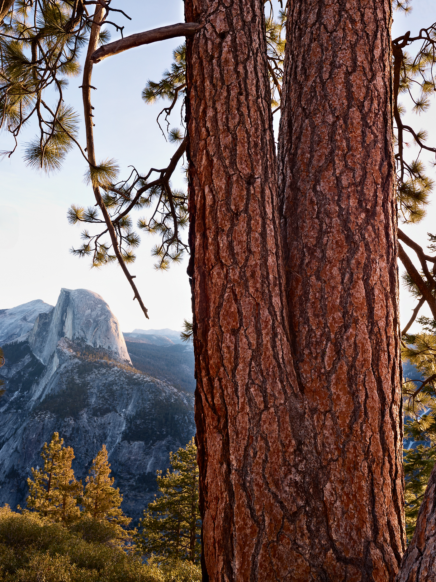 Glacier Point Pines by Peter Adams.