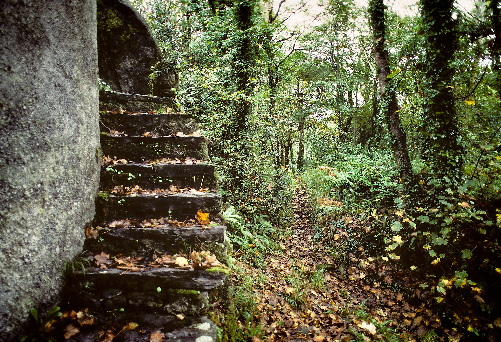 Forest Stairway by Copyright Peter Adams. All Rights reserved. Image may not be used, reproduced or retransmitted without prior written permission..