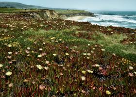 Coastal Wild Flowers by Peter Adams.