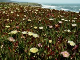 Coast Wild Flowers by Peter Adams.