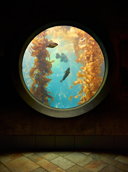 Porthole by Peter Adams.