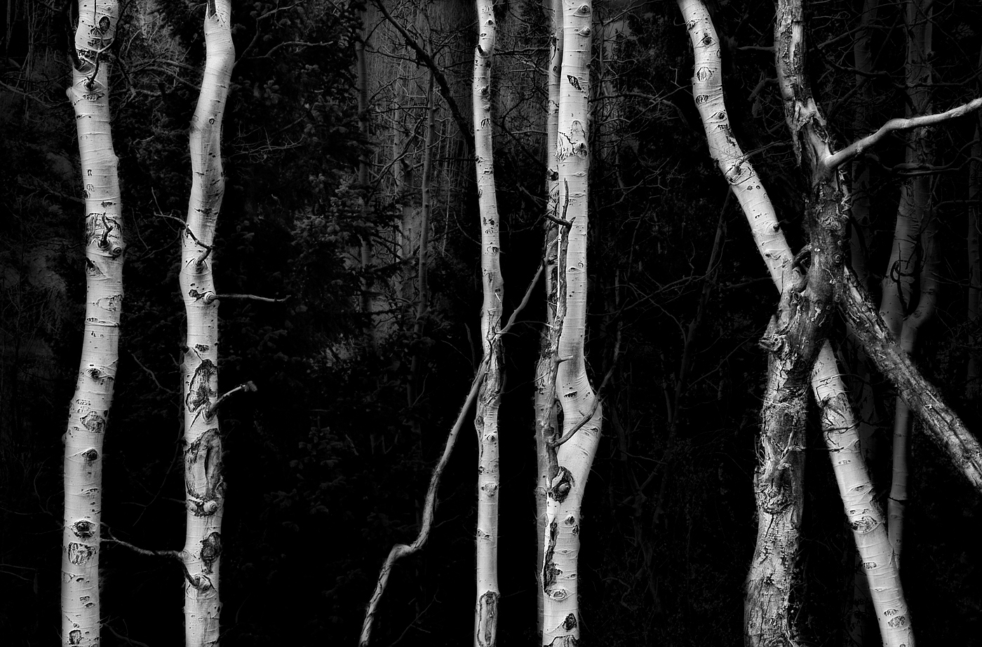 apsens.forest.web by .