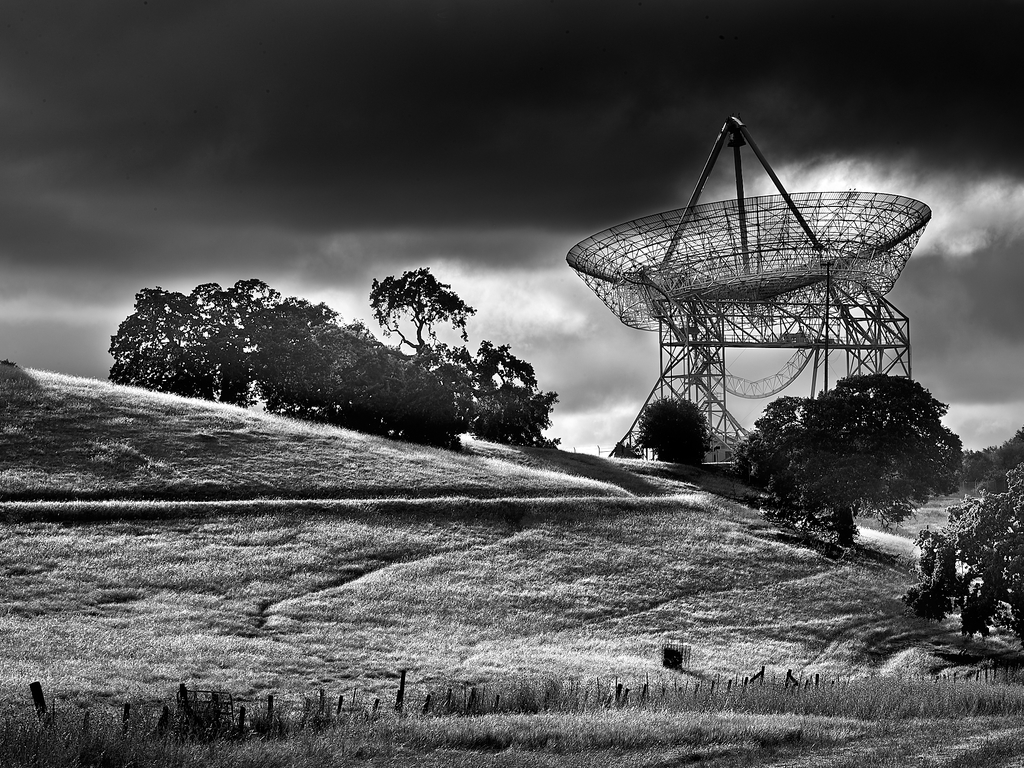 The Dish by Peter Adams.