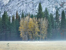 Ahwahnee Meadow by Peter Adams.