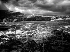 Thomas Fire Tumbleweed by Peter Adams.