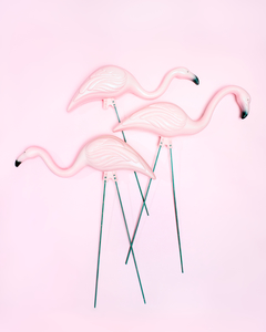 Plastic Flamingos by Peter Adams.