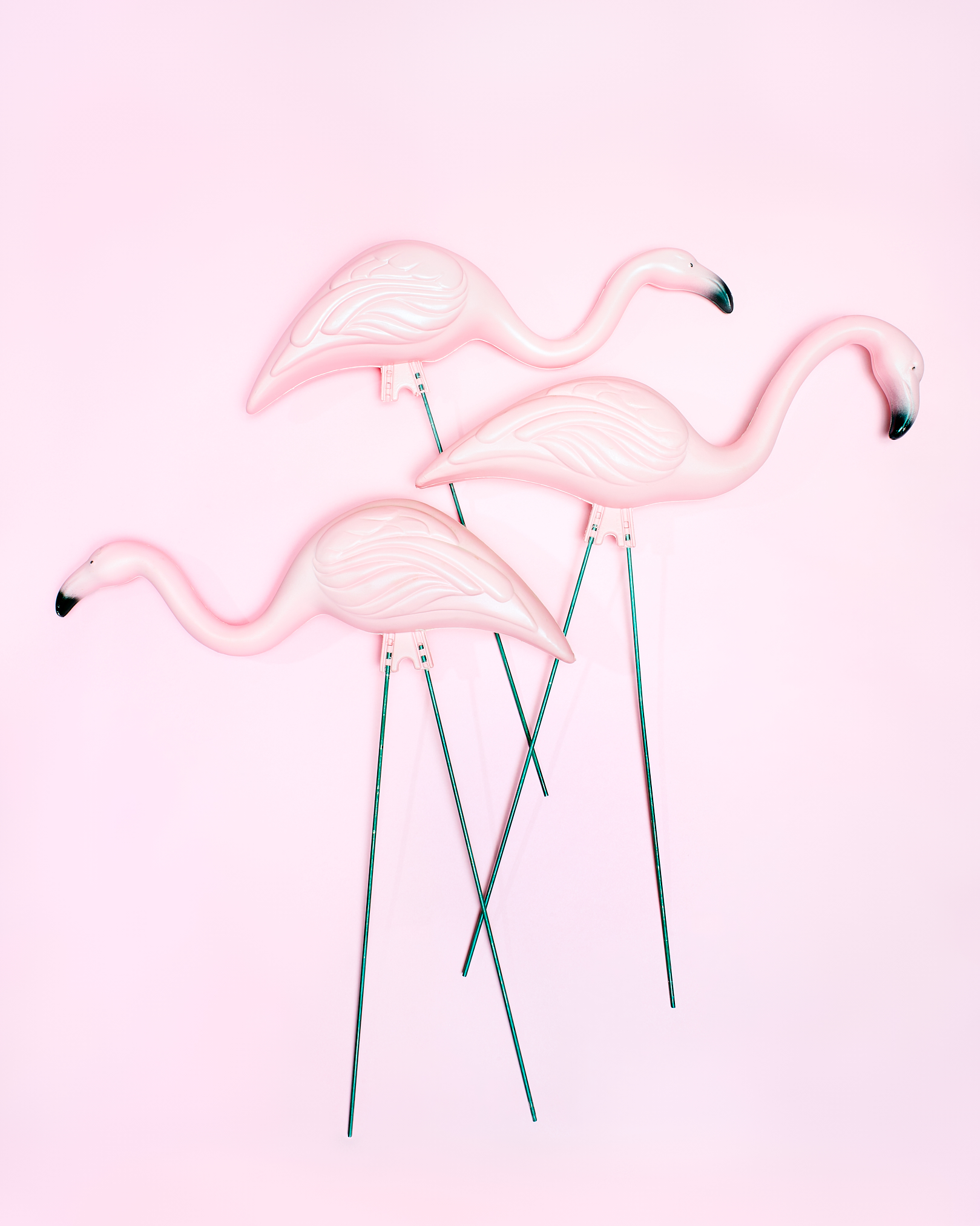 Plastic Flamingos by Peter Adams.