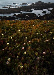 Coast Flowers by .