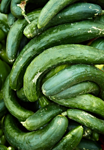 Cucumbers by Peter Adams.
