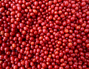 Cherry Tomatos by Peter Adams.