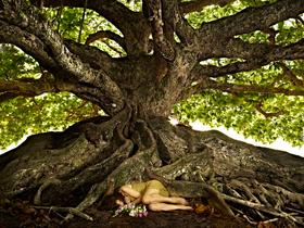 Banyan Tree by Peter Adams.