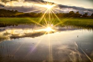 Lake Lagunita by Peter Adams.