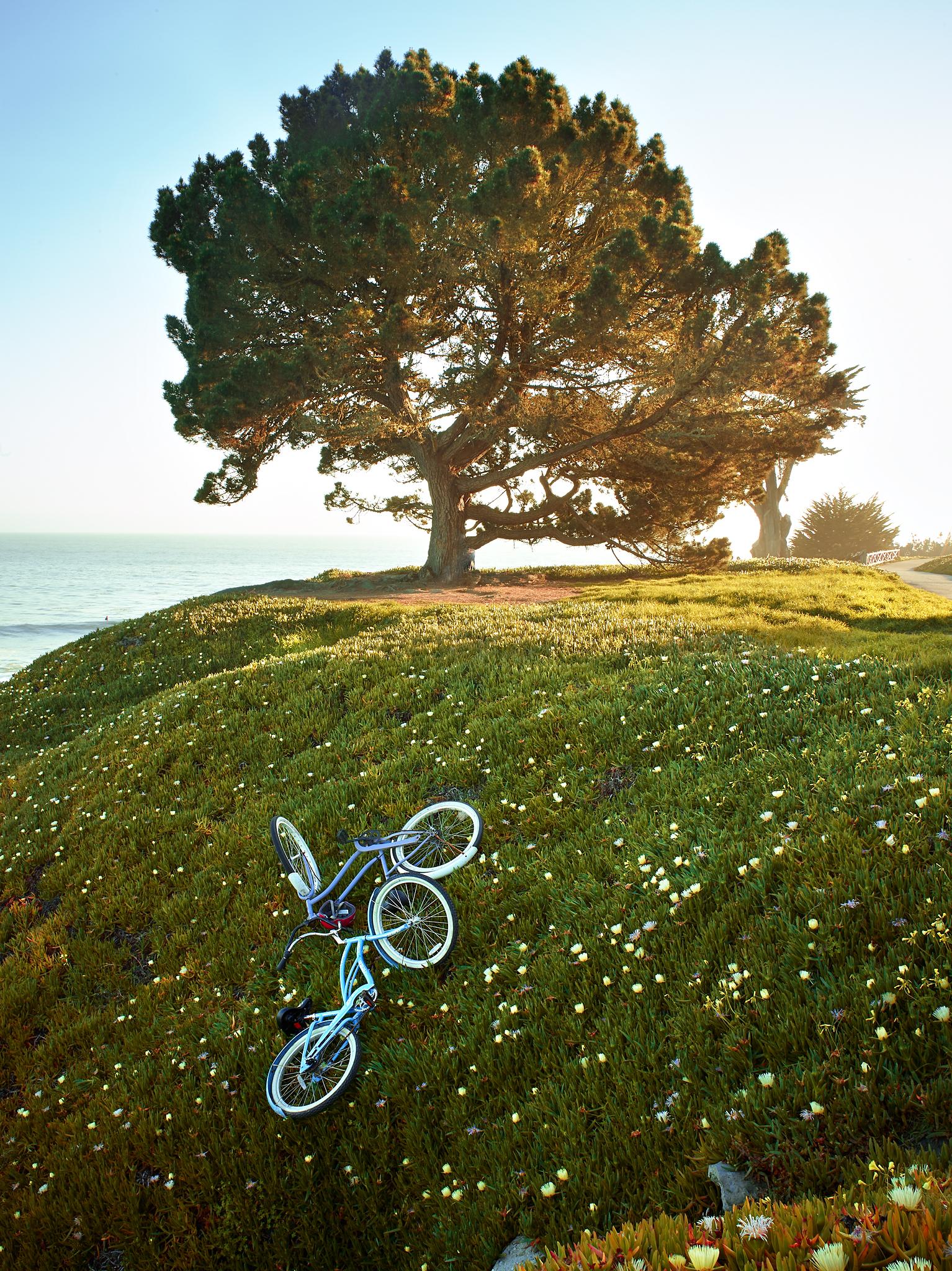 Beach Bicycles. Santa Cruz, Summer, flowers.