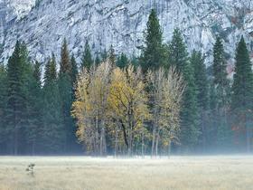 Ahwahnee Meadow by Peter Adams.