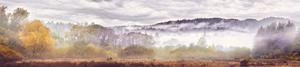 Henry Cowell Meadow by Peter Adams.