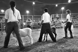 Judging of the Lambs by Peter Adams.