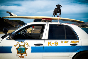 K-9 Stay Away. by Peter Adams.