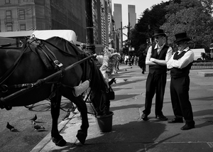 Carriage Horse by Peter Adams.